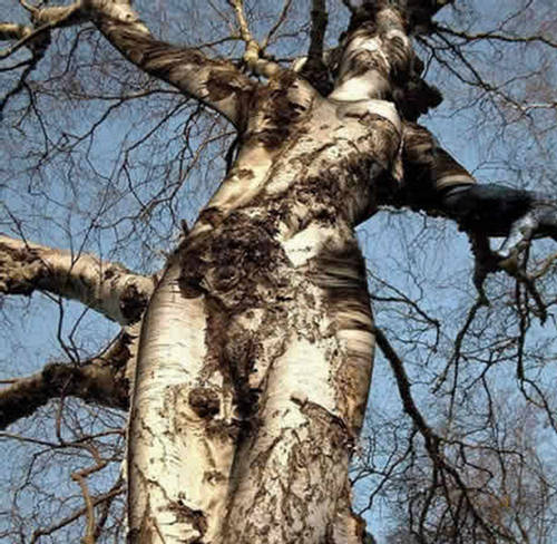 Unbelievable most strange trees in the World