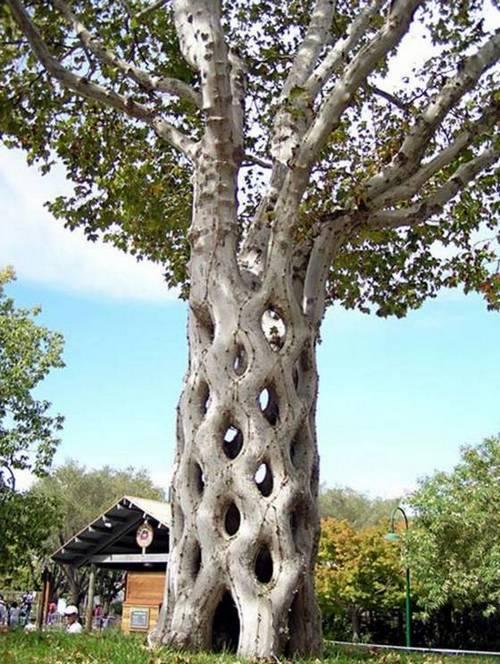 الأشجار الأكثر غرابة في العالم