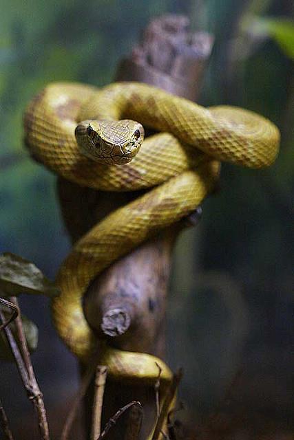 dangerous snake São Paulo, Brazil 3