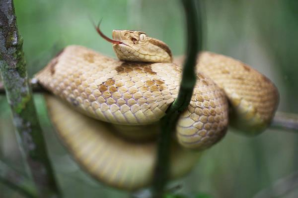 dangerous snake São Paulo, Brazil 4